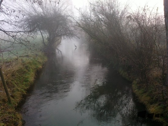 Reiher im Nebel